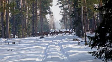 Konkurs plastyczny pt. ''Zima w lesie'' rozstrzygnięty !